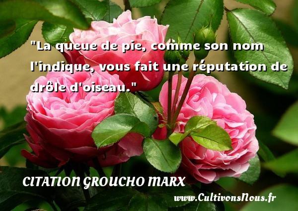Citation Groucho Marx - Citation oiseau - La queue de pie, comme son nom l indique, vous fait une réputation de drôle d oiseau. Une citation de Groucho Marx CITATION GROUCHO MARX