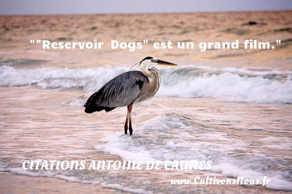 Citations - Citations Antoine de Caunes -  Reservoir  Dogs  est un grand film.  Citations de Antoine de Caunes     CITATIONS ANTOINE DE CAUNES