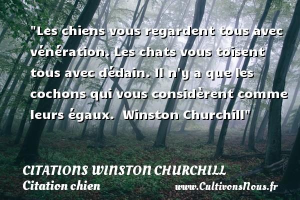 Citations Winston Churchill - Citation chien - Les chiens vous regardent tous avec vénération. Les chats vous toisent tous avec dédain. Il n y a que les cochons qui vous considèrent comme leurs égaux.   Winston Churchill   Une citation sur le chien CITATIONS WINSTON CHURCHILL