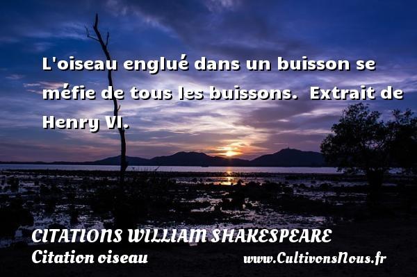 Citations William Shakespeare - Citation oiseau - L oiseau englué dans un buisson se méfie de tous les buissons.   Extrait de Henry VI.   Une citation de William Shakespeare CITATIONS WILLIAM SHAKESPEARE