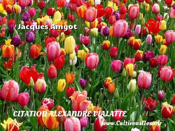 Jacques Amyot Une citation d  Alexandre Vialatte CITATION ALEXANDRE VIALATTE