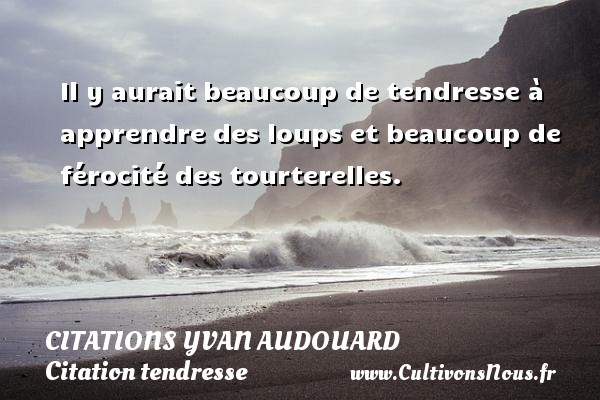 Il y aurait beaucoup de tendresse à apprendre des loups et beaucoup de férocité des tourterelles. Une citation d  Yvan Audouard CITATIONS YVAN AUDOUARD - Citation tendresse