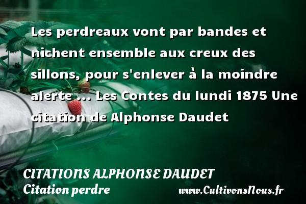 Citations - Citations Alphonse Daudet - Citation perdre - Les perdreaux vont par bandes et nichent ensemble aux creux des sillons, pour s enlever à la moindre alerte ...  Les Contes du lundi 1875  Une  citation  de Alphonse Daudet CITATIONS ALPHONSE DAUDET