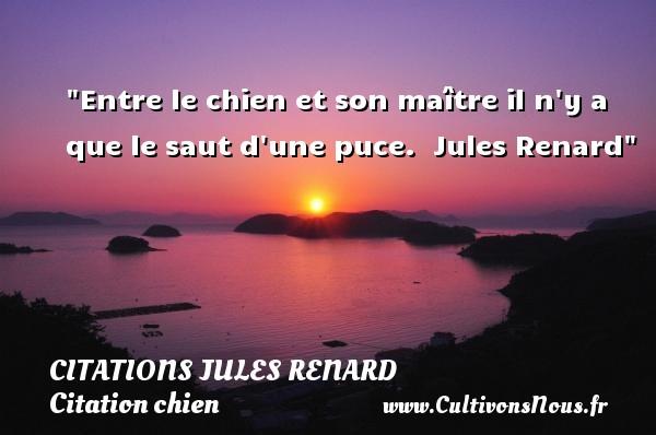 Citations Jules Renard - Citation chien - Entre le chien et son maître il n y a que le saut d une puce.   Jules Renard   Une citation sur le chien CITATIONS JULES RENARD