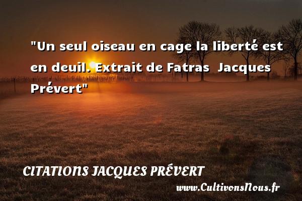 Un seul oiseau en cage la liberté est en deuil.  Extrait de Fatras   Jacques Prévert CITATIONS JACQUES PRÉVERT - Citations Jacques Prévert