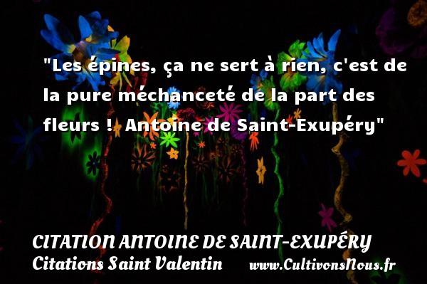 Citation Antoine de Saint-Exupéry - Citations Saint Valentin - Les épines, ça ne sert à rien, c est de la pure méchanceté de la part des fleurs !   Antoine de Saint-Exupéry   Une citation sur la Saint-Valentin   CITATION ANTOINE DE SAINT-EXUPÉRY