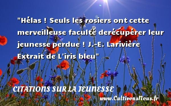 citation-bleu