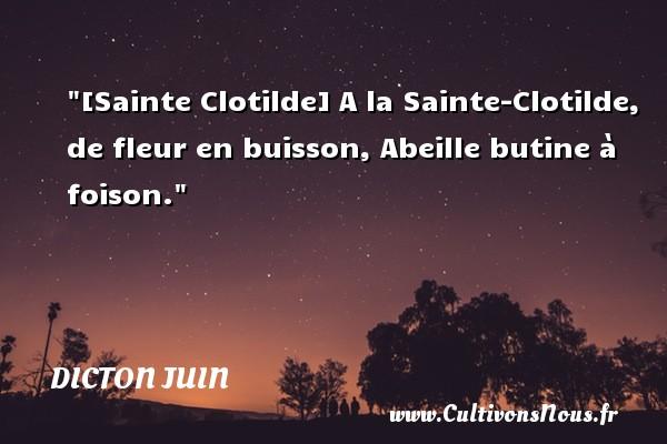 [Sainte Clotilde] A la Sainte-Clotilde, de fleur en buisson, Abeille butine à foison. Un dicton juin