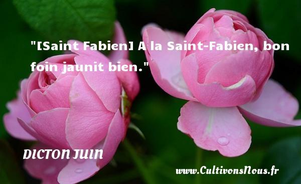 [Saint Fabien] A la Saint-Fabien, bon foin jaunit bien. Un dicton juin