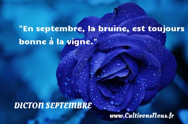 Dicton septembre - En septembre, la bruine, est toujours bonne à la vigne. Un dicton septembre DICTON SEPTEMBRE