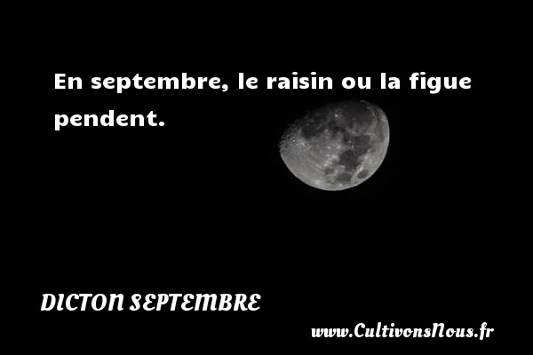 En septembre, le raisin ou la figue pendent. Un dicton septembre