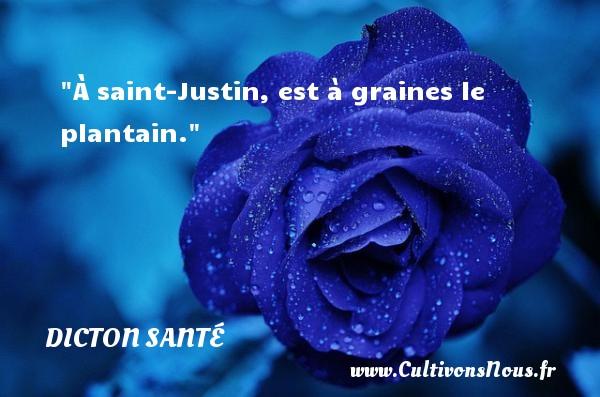 À saint-Justin, est à graines le plantain. Un dicton santé DICTON SANTÉ
