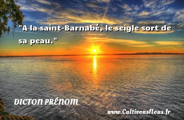 A la saint-Barnabé, le seigle sort de sa peau. Un dicton prénom DICTON PRÉNOM