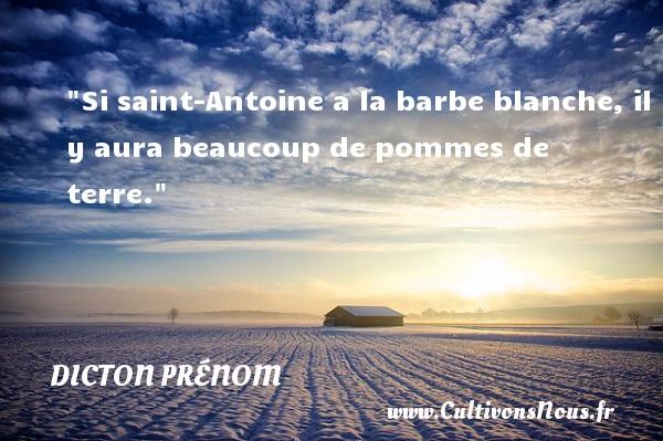 Si saint-Antoine a la barbe blanche, il y aura beaucoup de pommes de terre. Un dicton prénom DICTON PRÉNOM