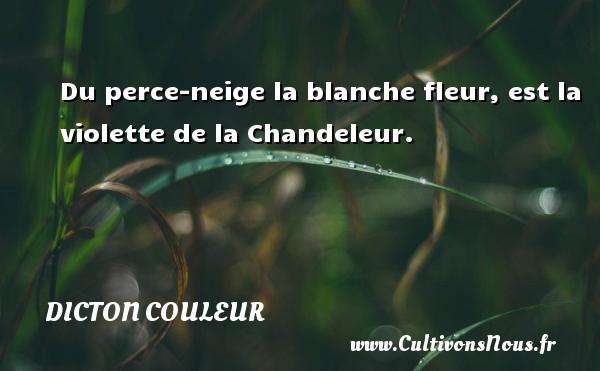 Dicton couleur - Du perce-neige la blanche fleur, est la violette de la Chandeleur. Un dicton couleur DICTON COULEUR