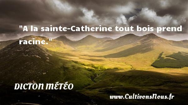 A la sainte-Catherine tout bois prend racine. Un dicton météo DICTON MÉTÉO