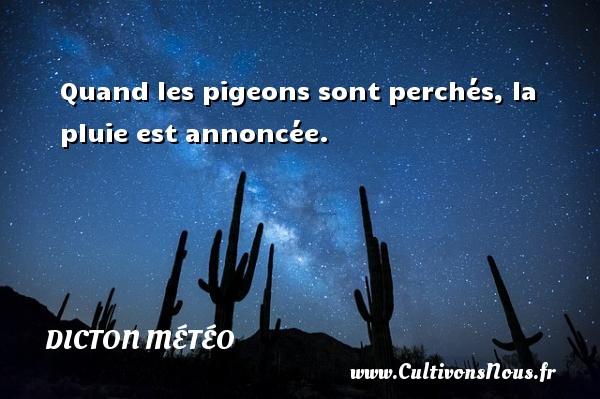 Quand les pigeons sont perchés, la pluie est annoncée. Un dicton météo DICTON MÉTÉO
