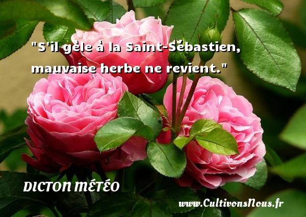 S il gèle à la Saint-Sébastien, mauvaise herbe ne revient. Un dicton météo DICTON MÉTÉO