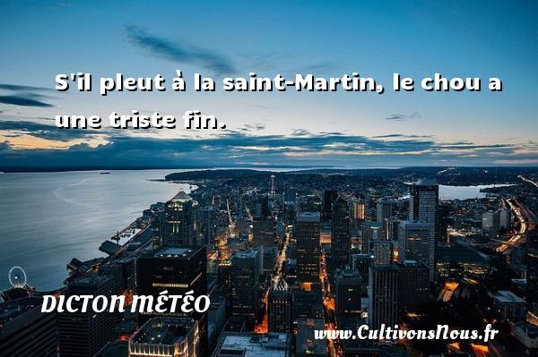 S il pleut à la saint-Martin, le chou a une triste fin. Un dicton météo DICTON MÉTÉO