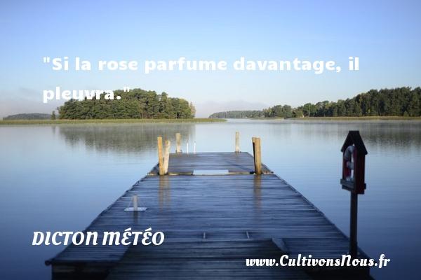 Si la rose parfume davantage, il pleuvra. Un dicton météo DICTON MÉTÉO