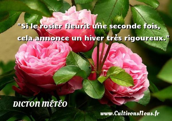 Dicton météo - Si le rosier fleurit une seconde fois, cela annonce un hiver très rigoureux. Un dicton météo DICTON MÉTÉO