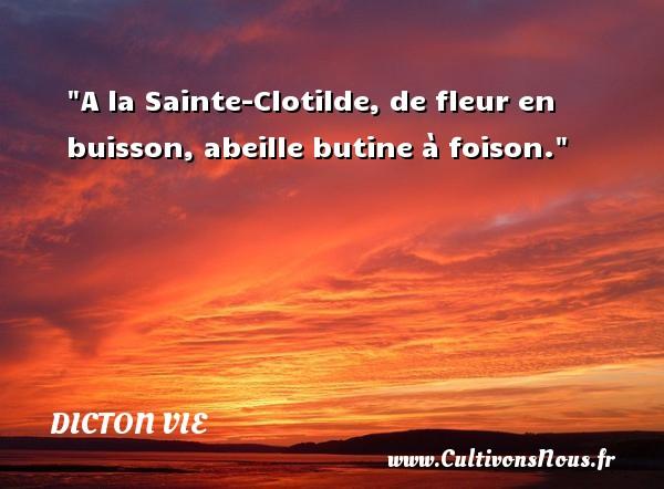 Dicton vie - A la Sainte-Clotilde, de fleur en buisson, abeille butine à foison. Un dicton vie DICTON VIE