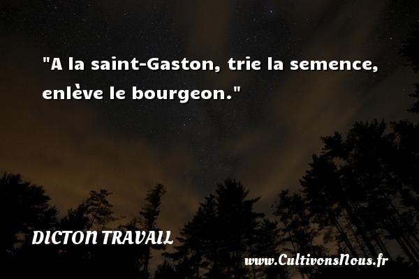 A la saint-Gaston, trie la semence, enlève le bourgeon. Un dicton travail