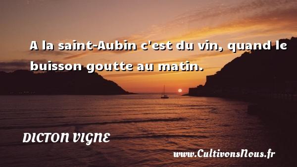 A la saint-Aubin c est du vin, quand le buisson goutte au matin. Un dicton vigne