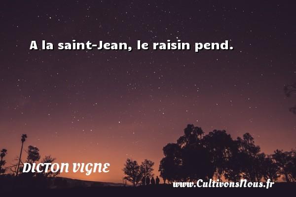 A la saint-Jean, le raisin pend. Un dicton vigne