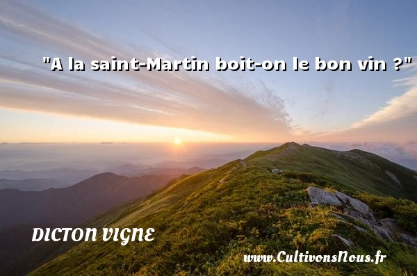 A la saint-Martin boit-on le bon vin ? Un dicton vigne