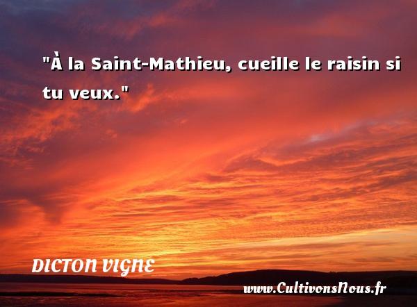À la Saint-Mathieu, cueille le raisin si tu veux. Un dicton vigne