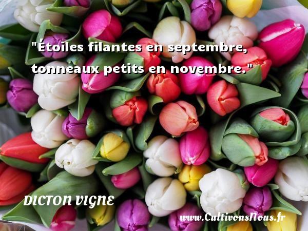 Étoiles filantes en septembre, tonneaux petits en novembre. Un dicton vigne