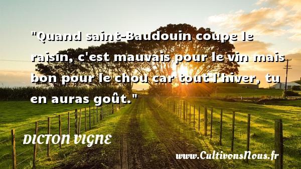 Quand saint-Baudouin coupe le raisin, c est mauvais pour le vin mais bon pour le chou car tout l hiver, tu en auras goût. Un dicton vigne