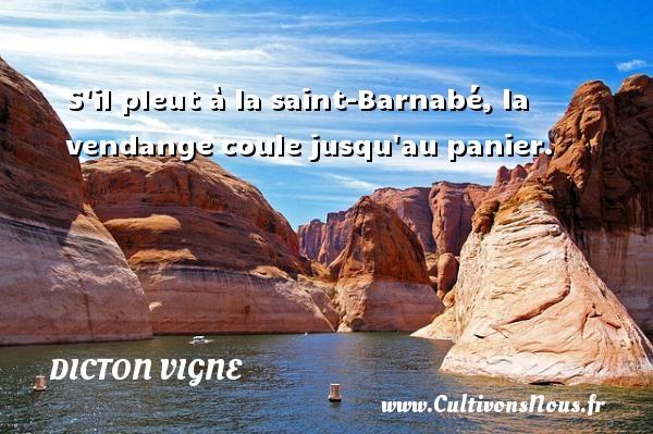 S il pleut à la saint-Barnabé, la vendange coule jusqu au panier. Un dicton vigne