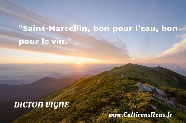 Saint-Marcellin, bon pour l eau, bon pour le vin. Un dicton vigne