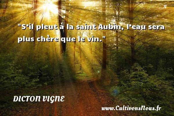 S'il pleut à la saint Aubin, l'eau sera plus chère que le vin. Un dicton vigne