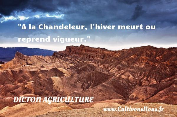 A la Chandeleur, l hiver meurt ou reprend vigueur. Un dicton agriculture