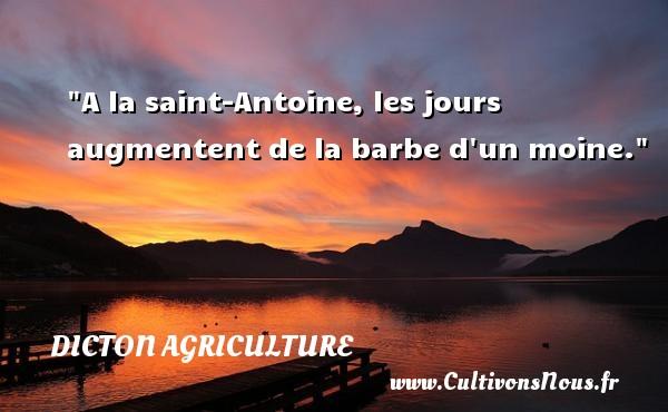 A la saint-Antoine, les jours augmentent de la barbe d un moine. Un dicton agriculture