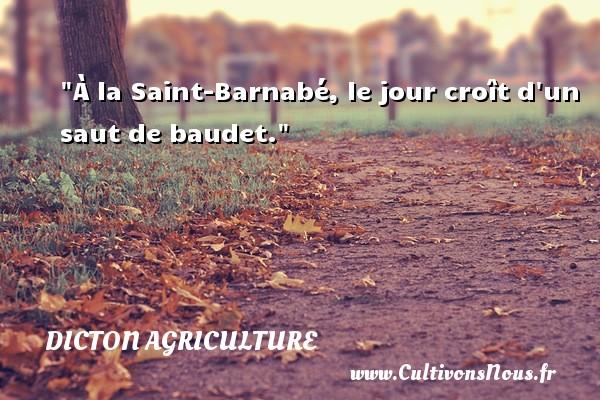 À la Saint-Barnabé, le jour croît d un saut de baudet. Un dicton agriculture