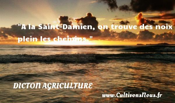 A la Saint-Damien, on trouve des noix plein les chemins. Un dicton agriculture