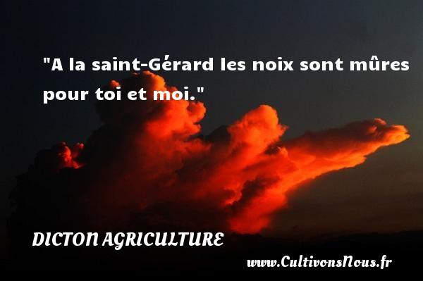 A la saint-Gérard les noix sont mûres pour toi et moi. Un dicton agriculture