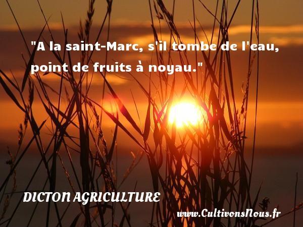A la saint-Marc, s il tombe de l eau, point de fruits à noyau. Un dicton agriculture