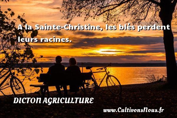Dicton agriculture - A la Sainte-Christine, les blés perdent leurs racines. Un dicton agriculture DICTON AGRICULTURE