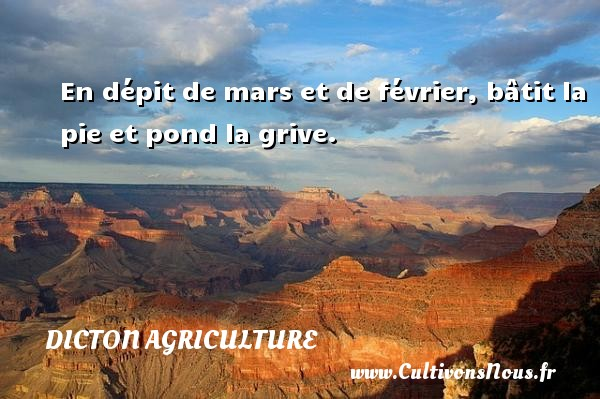 Dicton agriculture - En dépit de mars et de février, bâtit la pie et pond la grive. Un dicton agriculture DICTON AGRICULTURE