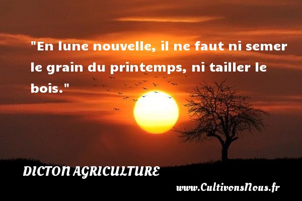 En lune nouvelle, il ne faut ni semer le grain du printemps, ni tailler le bois. Un dicton agriculture