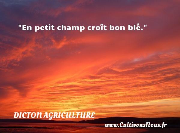 En petit champ croît bon blé. Un dicton agriculture