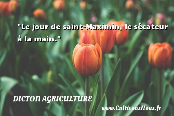 Le jour de saint-Maximin, le sécateur à la main. Un dicton agriculture