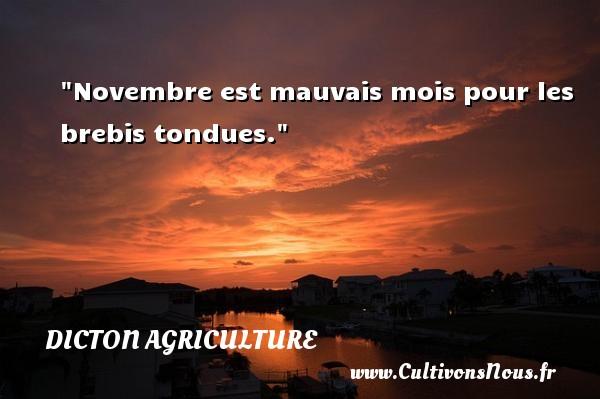 Novembre est mauvais mois pour les brebis tondues. Un dicton agriculture