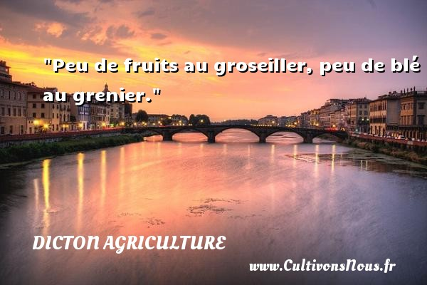 Peu de fruits au groseiller, peu de blé au grenier. Un dicton agriculture