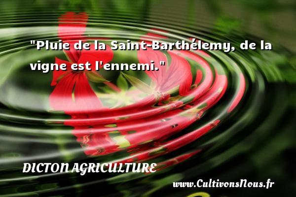 Pluie de la Saint-Barthélemy, de la vigne est l ennemi. Un dicton agriculture